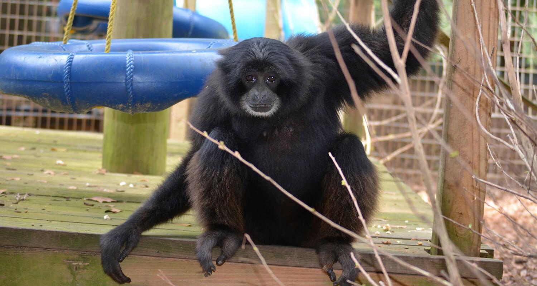 Primate at Noahs Ark